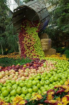 Fall for Autumn - A river of apples at harvest time Fruit And Veg, Fresh Fruit, Comida Picnic, Image Fruit, Harvest Time, Apple Harvest, Autumn Harvest, Fall Halloween, Agriculture