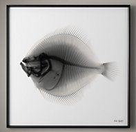 Nick Veasey X-ray Photography: Plaice   Framed Artwork   Restoration Hardware