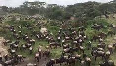 Enjoy 5 days lodge safari in Tanzania at Leken Adventure. Safari Holidays, Tanzania Safari, Nature Gif, Kilimanjaro, African Safari, Nature Animals, Vacation Trips, Continents, Animal Kingdom