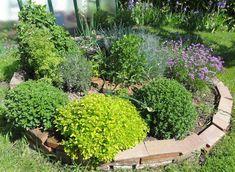 Jak vysadit zeleninový záhon | rady a tipy. K práci na zeleninové zahrádce musí mít člověk vztah. Doma, pokud je člověk Plants, Gardening, Syrup, Garten, Flora, Plant, Lawn And Garden, Planting, Horticulture