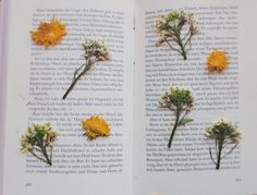booksdirect: Pressed flowers.