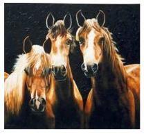 Marleen B. drie musketeers