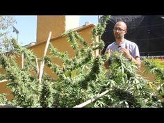 Marihuana Television News 06