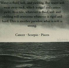 Water signs: Cancer, Scorpio & Pisces, but Capricorns can be half fish, which means half water Gemini And Scorpio, Astrology Zodiac, Astrology Signs, Scorpio Woman, Astrology And Horoscopes, Cancer Horoscope, Zodiac Cancer, Zodiac Facts, Zodiac Signs
