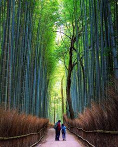 The Street of bamboo forest in Arashiyama.  Location:Kyoto Japan   竹林の小径 朝早くから散歩する外国人の親子 この時間を選んで良かったね  #arashiyama #bambooforest #kyoto #竹林の小径 #嵯峨野嵐山 #朝 #散歩 #walking by rekusan.jp