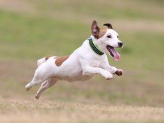 2012年春、ディニーズガーデン飛行犬撮影会 : 飛行犬撮影隊-KIZUNA-