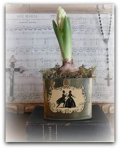 Old tin with hyacinth