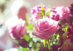 Parsemer de roses la vie de tous ceux qui m'entourent