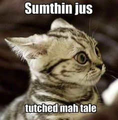 LOL! Cats are hilarious! #SomethingTouchedMyTail #ScaredyCat