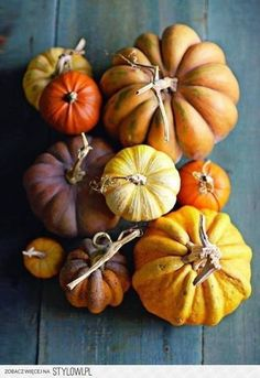 Harvest pumpkins and gourds