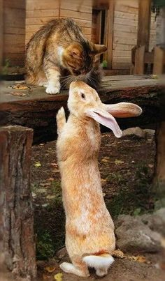 Kitty meets bunny. (: