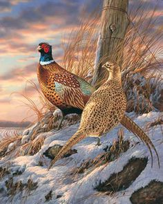 Pheasants - no recipe
