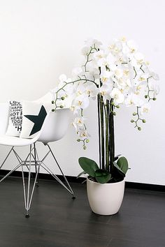 Home affaire Orchidee XXL