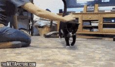 This Cat's Only Weakness