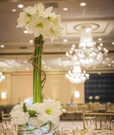 Amarilys wrapped in Curly Willow for an elegant corporate event at El San Juan Hotel by STEM Events