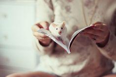 Bilbo Forever   Serendipity  Melina Souza - serendipity <3  http://melinasouza.com/2015/05/07/bilbo-forever/  #Pet #Hamster #Melina Souza