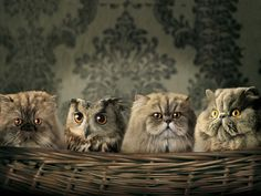An owl and some owl looking cats...  #Photography