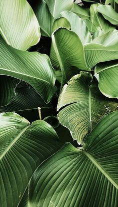 Green Leaves Clean Air – Best Garden Plants And Planting Wallpaper Bali, Garden Wallpaper, Plant Wallpaper, Landscape Wallpaper, Leaves Wallpaper Iphone, Green Nature Wallpaper, Iphone Wallpaper Jungle, Wallpaper Ideas, Flower Wallpapers For Iphone