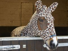 Rodo sporting a leopard print number in his stable  Auditioning for panto? No, they're sporting the very latest in equine fashion: Customers are chomping at the bit for horse onesies