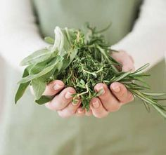 6 Medicinal Herbs You Can Grow