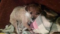 LOST DOG: 07/19/2017 - Glenwood City, Wisconsin, WI, United States. Ref#: L33771 - #CritterAlert #LostPet #LostDog #MissingDog