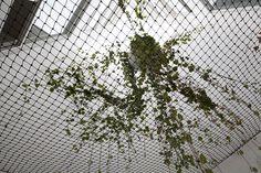 Vista de la vegetación flotada que incluimos dentro de los patios interiores para mejor aprovechamiento del espacio