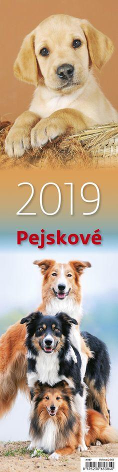 Nástěnný kalendář - vázanka Pejskové 2019 Teddy Bear, Movies, Movie Posters, Animals, Art, Art Background, Animales, Film Poster, Animaux