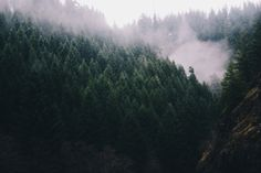 hannahkemp:  Fog in Tillamook State Forest//Oregon December 2015    from The REZs EDGE - Destruction & Redemption by author/writer Brad Jensen  FULL CHAPTERs PRE-RELEASED (Read 4 Free - click link here) http://bradjensen.wix.com/authorbradjensen Please REBLOG/SHARE if you dig it Thanks Folks!  Watch for the Book release date here: http://authorbradjensen.tumblr.com/ or here: http://www.facebook.com/bradjensenauthor/ or here: http://bradjensen.wix.com/authorbradjensen  FOLLOW ME for killer…