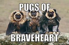 #pug #gameofthrones