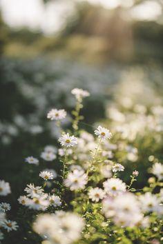 Nature Aesthetic, Flower Aesthetic, Aesthetic Photo, Aesthetic Pictures, Nature Wallpaper, Nature Photos, Pretty Pictures, Pretty Pics, Flower Power