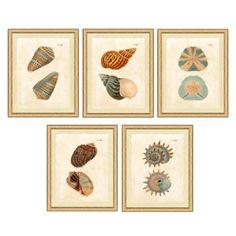 Conchae Botanica | Ballard Designs