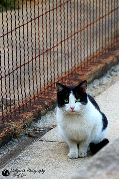 44 best tuxedo kitties i have five also cow cats