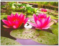Schau dir einen Baum, eine Blume, eine Pflanze an. Lass dein Gewahrsein darauf ruhen. Wie still sie sind, wie tief sie im Sein wurzeln. Lass zu, dass die Natur dich die Stille lehrt.  Eckhart Tolle