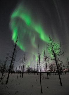 Ghostly Glow, curtains of auroras shimmer over the snow covered forests of Norilsk, Russia
