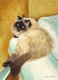 Azio by Drew Stouble on Catmandrew.com