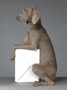 Acne William Wegman chien braques de Weimar