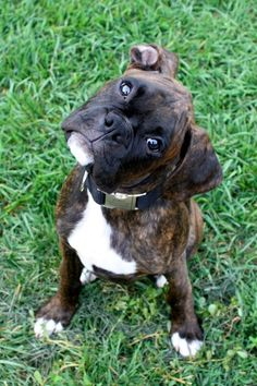Did you just say W-A-L-K? (Boxer)