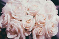 roses | hug-you