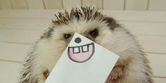 Impossibly Cute Hedgehog Appears To Love Costumes, Calendars And Short, Stubby Walks On The Beach