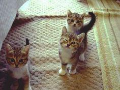 winking kitten! so cute!