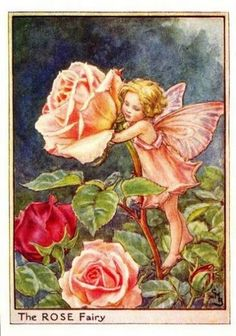 "Rose Flower Fairy ""Best and dearest flower that grows, Perfect both to see and smell; Words can never, never tell Half the beauty of a Rose...."""