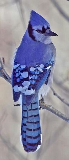 A blue jay. Seen them a million times, never realized they were this subtly gorgeous.