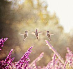Hummingbird photography. spring art. whimsical photography. dreamy. nursery decor. little girl's room. girly home decor. floral. flowers.