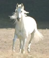 blanco Shadowfax horse   shadowfax1.jpg