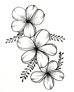 Beautiful Ink Flower Drawing - Drawing Flowers Mandala In Ink Flower Art Drawing Beautiful 25 Beautiful Flower Drawing Information Ideas Tattoos Flower Drawing Beautiful Flower Draw. Easy Flower Drawings, Flower Art Drawing, Beautiful Flower Drawings, Pencil Drawings Of Flowers, Floral Drawing, Flower Sketches, Drawing Drawing, Drawing Artist, Art Drawings Sketches