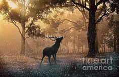 Lonely Stagg by Sebastien Coell