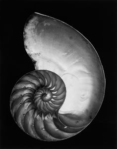 """zeroing: """" Edward Weston """""""