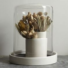 shane powers cut clay cylinder and glass dome - west elm