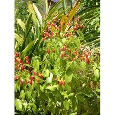 1 Kg Tarçın Toz Ekstresi - Doğal Tedavi - İbrahim Gökçek - Alternatif Tıp - Bitkisel Ürünler - İksir - Alovera - Bitkisel Sağlık Ürünleri - Şifalı Bitkiler - Bitkisel Setler - Bitkisel İlaçlar - Herbalist İlaç Değil Bitkisel Gıda Takviyesidir. www.alternatiftip.com.tr