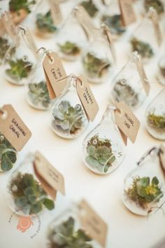 The Ultimate Succulent Wedding Guide - Favors - The Ultimate Succulent Wedding Guide - Favors - wedding decor diy Wedding Favors And Gifts, Affordable Wedding Favours, Succulent Wedding Favors, Creative Wedding Favors, Succulant Wedding, Wedding Tokens, Wedding Guest Favors, Terrarium Wedding Favor, Wedding Presents For Guests